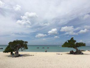 Bezoek de beroemde divi divi boom tijdens je vakantie Aruba