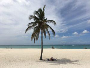 Vakantie Aruba: palmboom op het strand