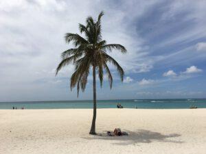 Zonnen onder een Palmboom op een strand in Aruba