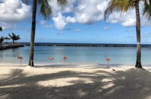 Flamingo Beach Renaissance Eiland Aruba